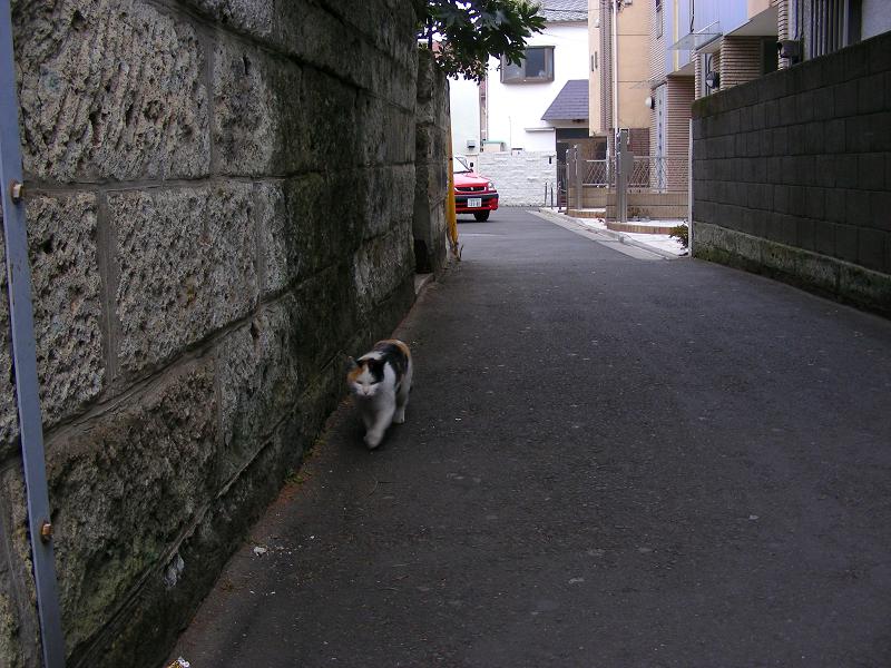 路地ですれ違った三毛猫1