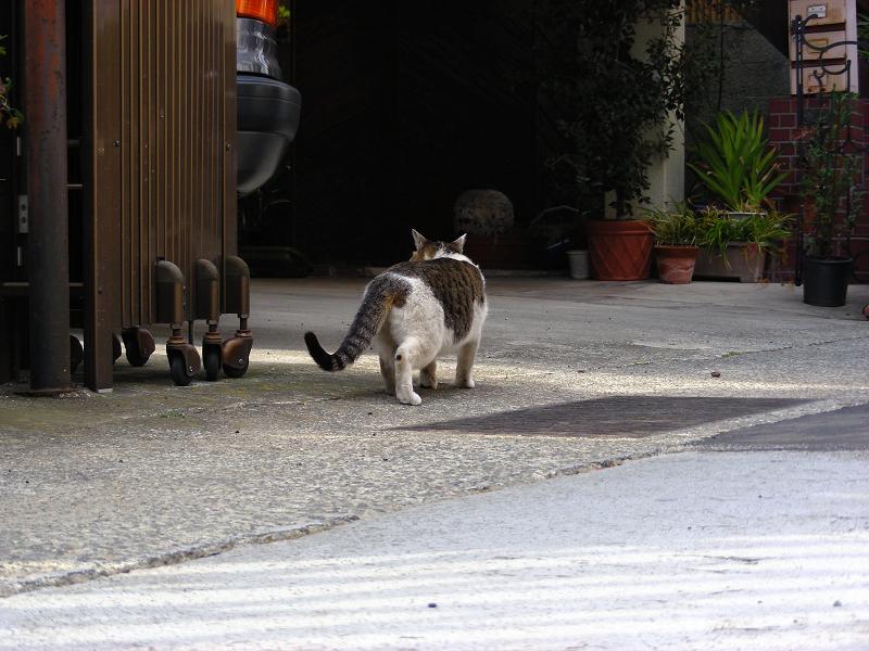 門扉とキジ白猫1