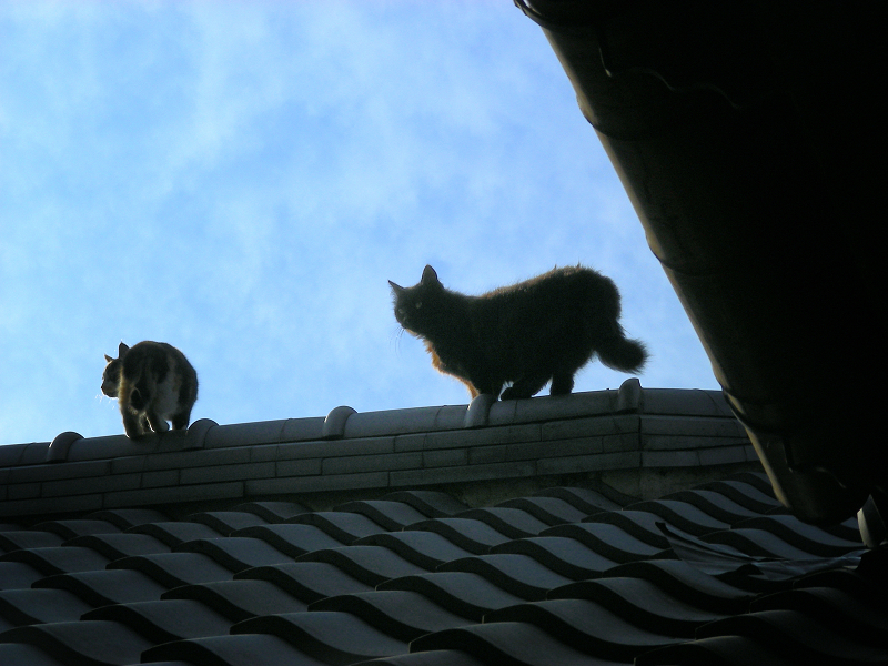 青空と屋根の上の猫たち2