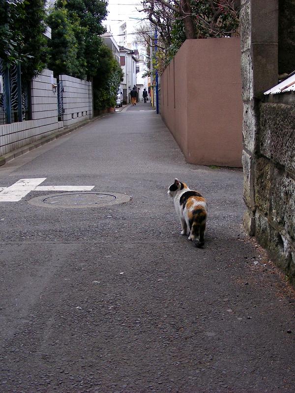 路地ですれ違った三毛猫2
