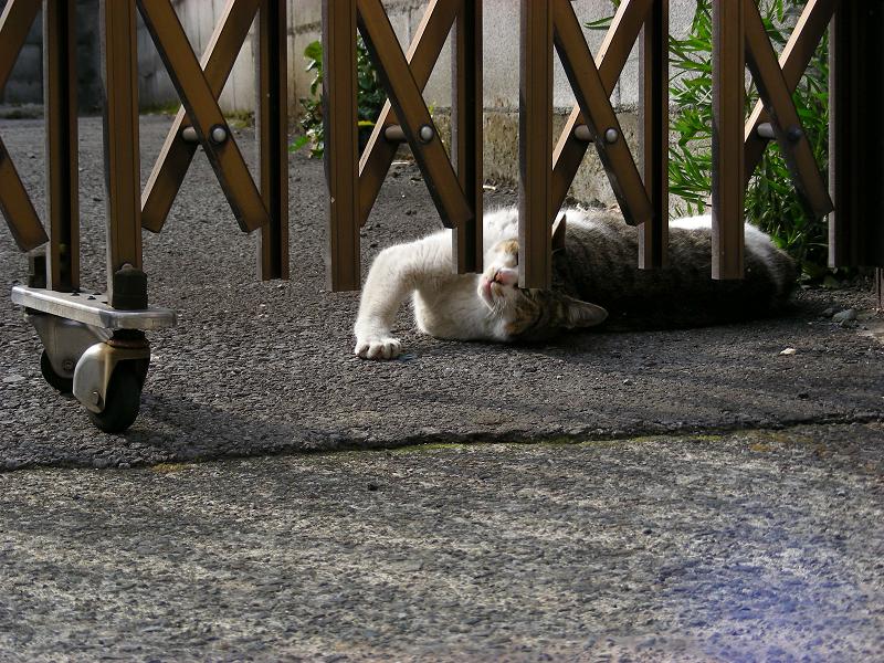 門扉とキジ白猫3