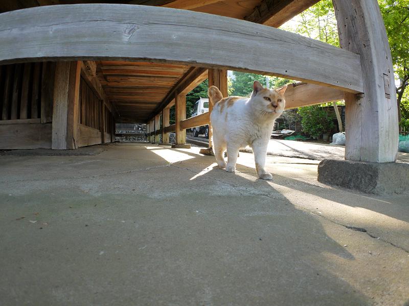 濡れ縁下を戻ってきた茶白猫2