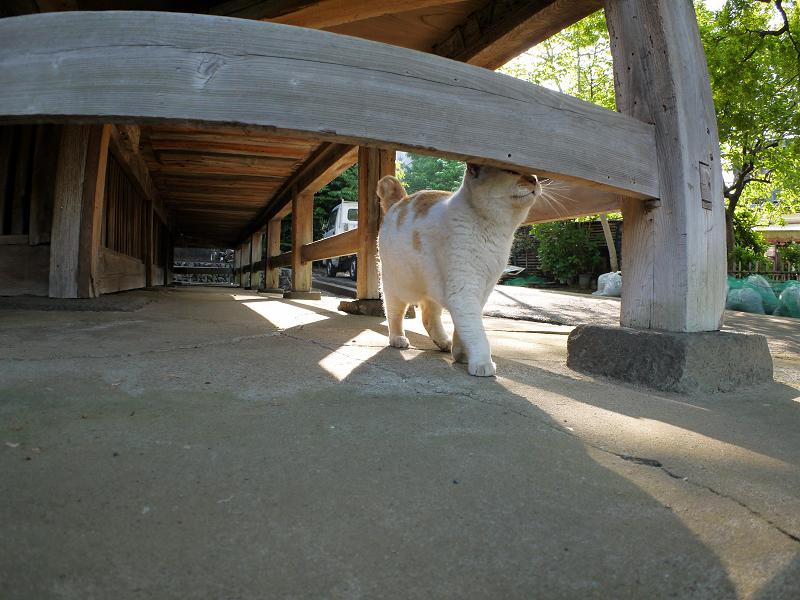 濡れ縁下を戻ってきた茶白猫3