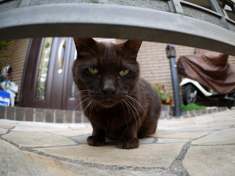 門扉と黒猫1