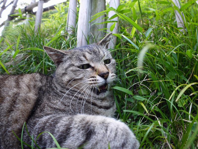 斜面で悶絶するキジトラ猫1