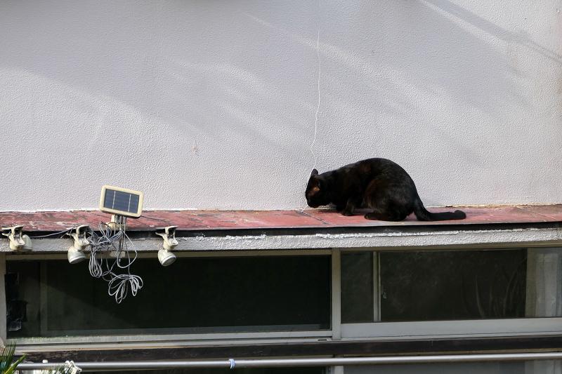 赤い庇で休憩する黒猫1