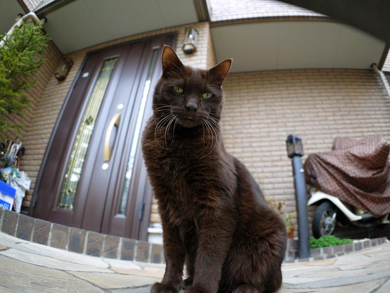 門扉と黒猫2