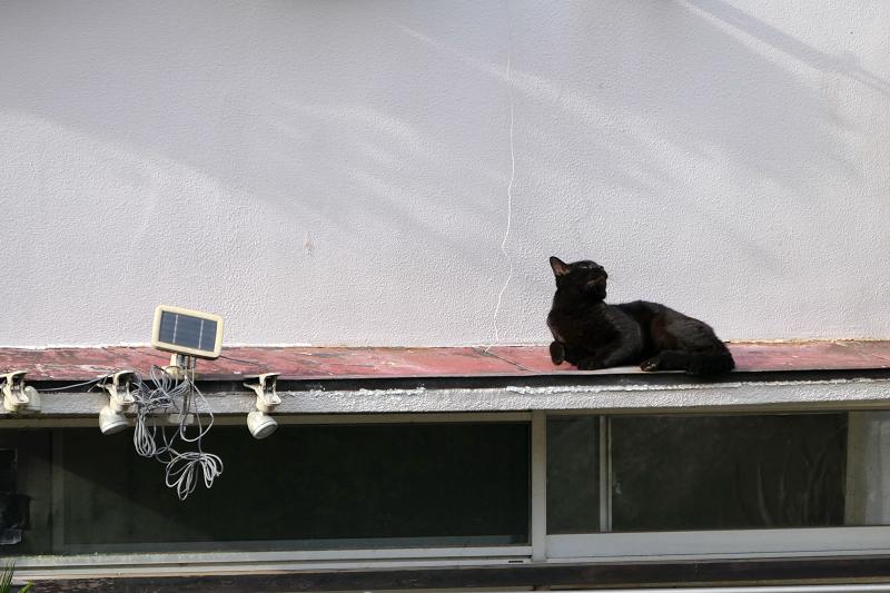 赤い庇で休憩する黒猫2
