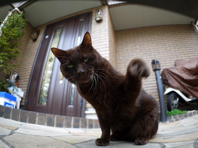 門扉と黒猫3