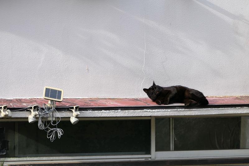 赤い庇で休憩する黒猫3