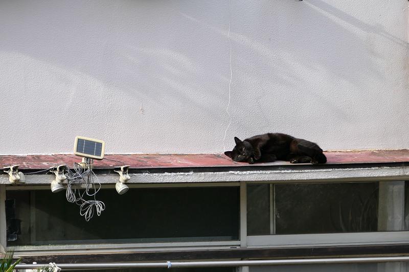 赤い庇で休憩する黒猫4