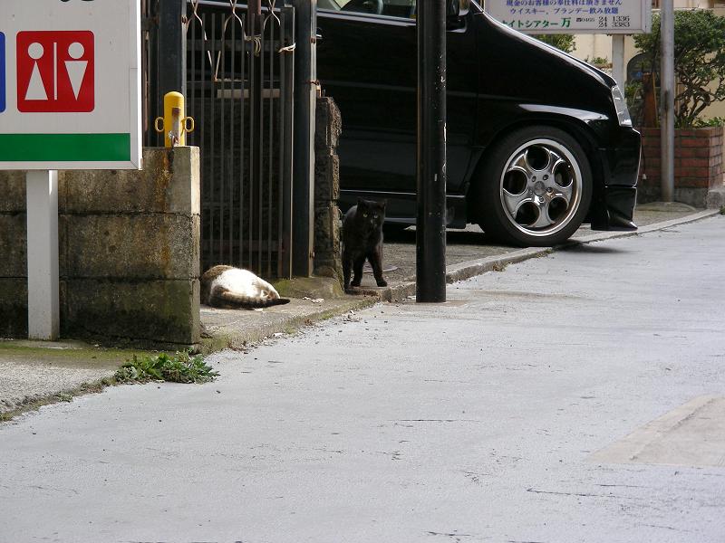 黒猫とキジ白猫1