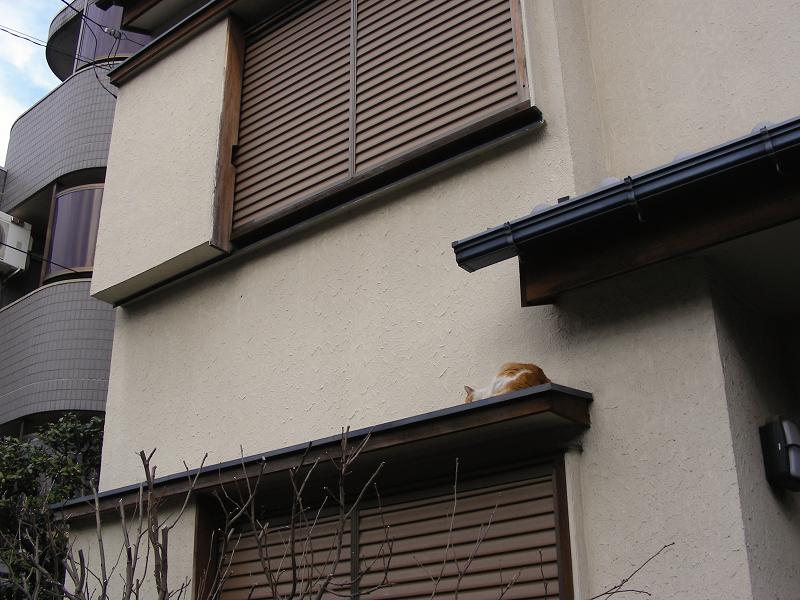 町なか民家庇の茶白猫1