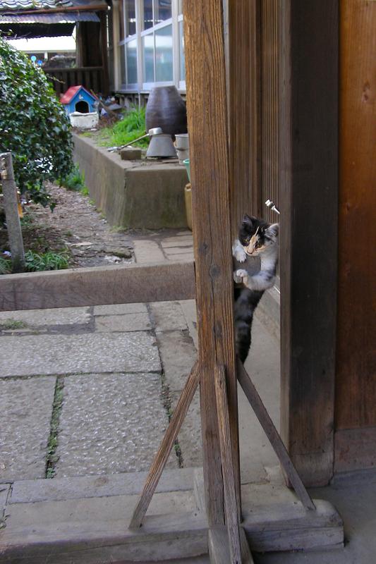 支柱に登る三毛仔猫