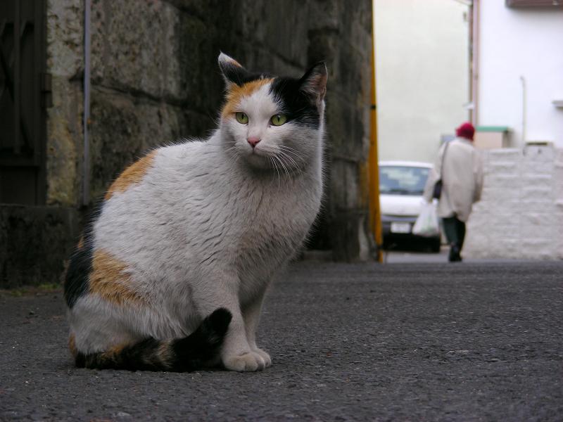 路地で動かない三毛猫2