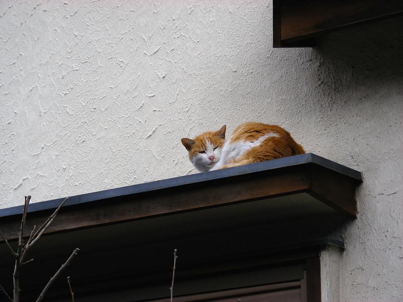 町なか民家庇の茶白猫2