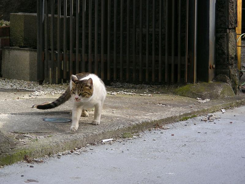 黒猫とキジ白猫3