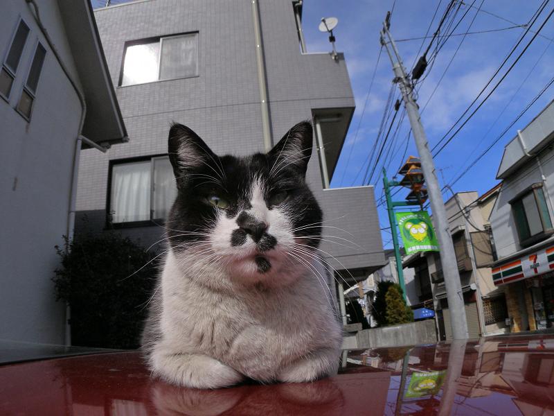 赤い車上の黒白猫と青空1