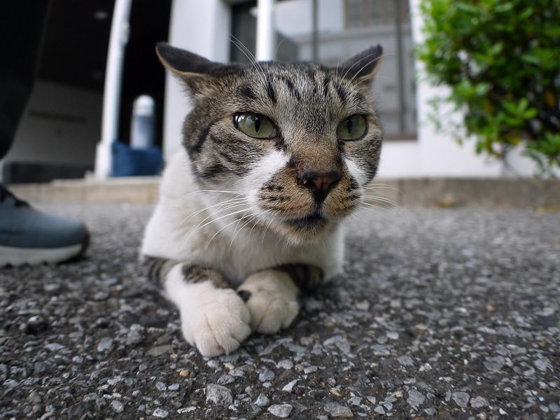 楽しいキジ白猫2