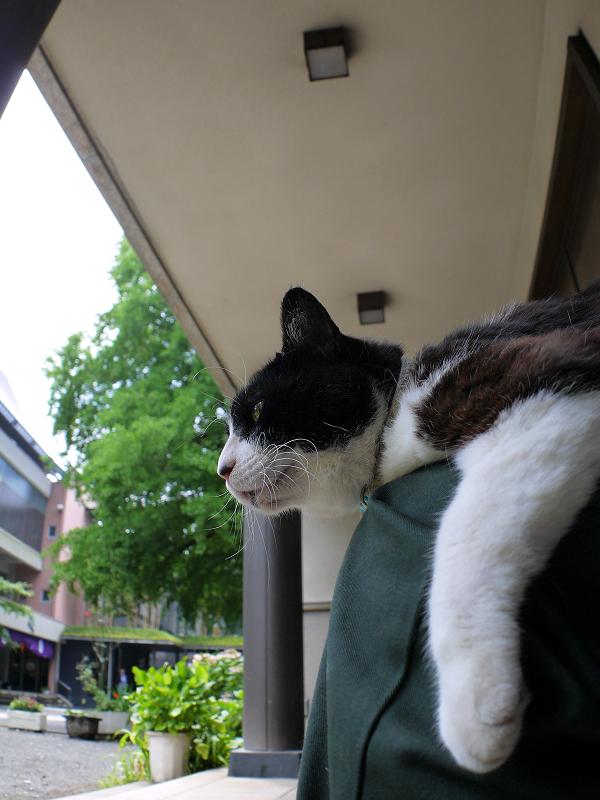 魚眼片手撮り黒白猫1