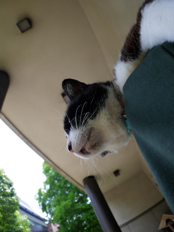魚眼片手撮り黒白猫3