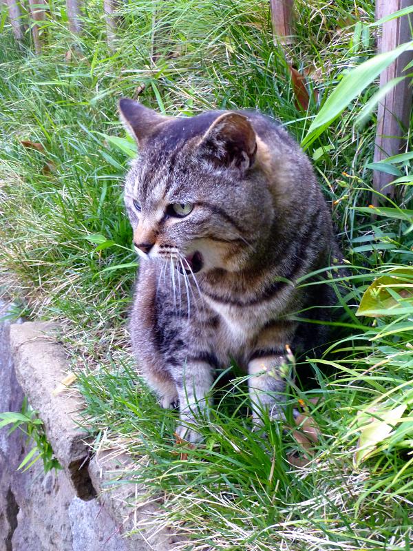 斜面で目が覚めたキジトラ猫1