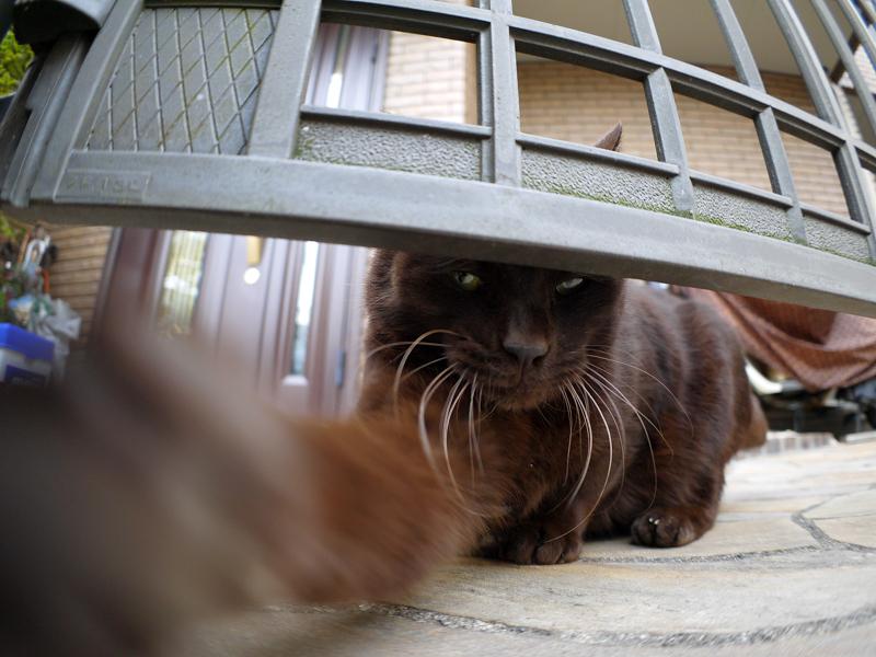 ベロ出し黒猫と門扉2