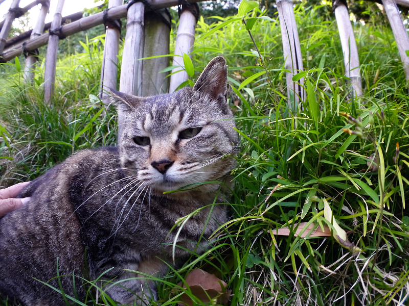 斜面で目が覚めたキジトラ猫3
