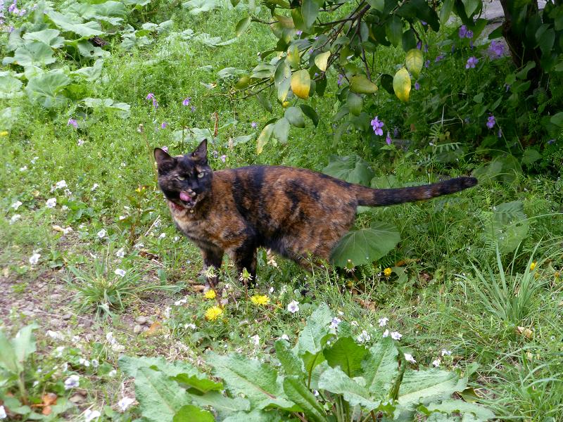 草むらの中のサビ柄猫1