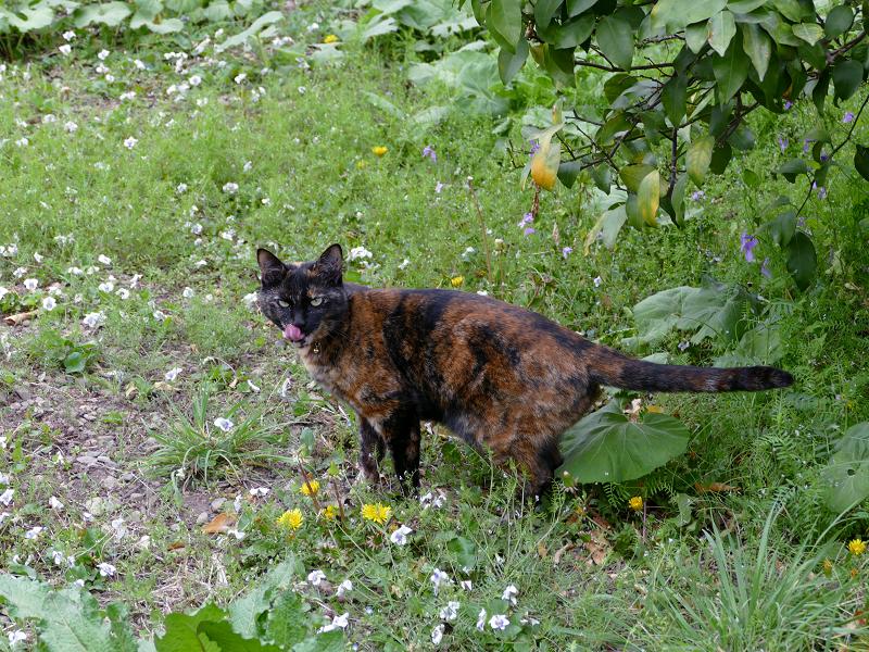 草むらの中のサビ柄猫2