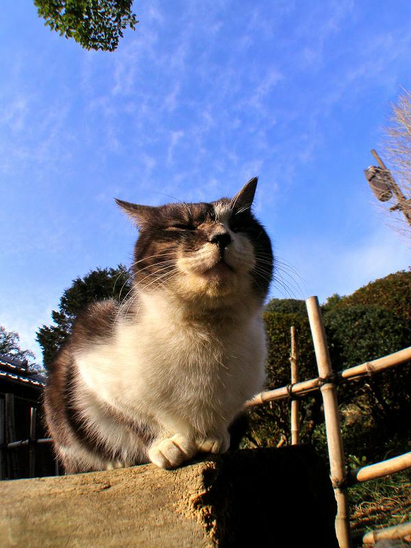蒼天下の猫