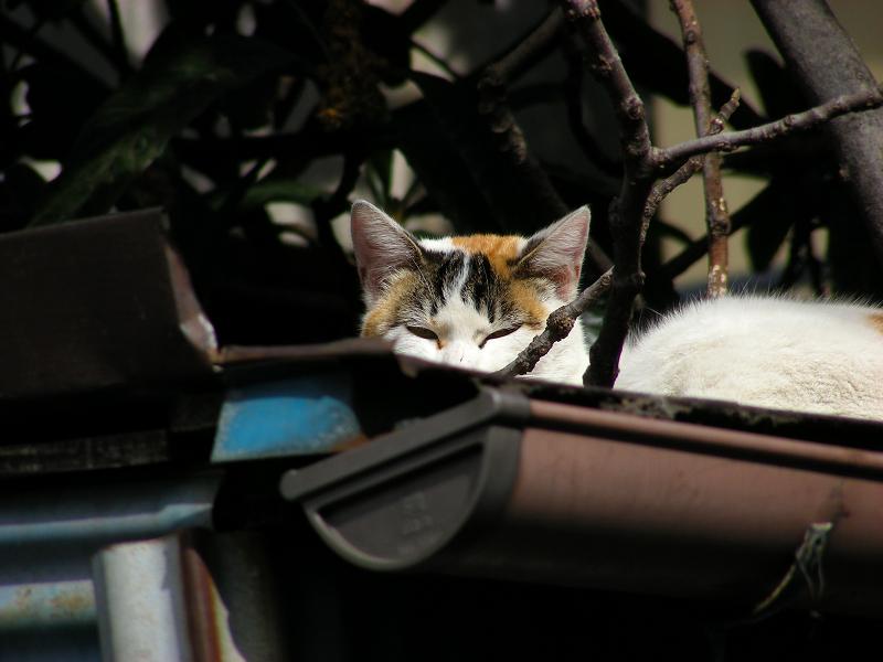 トタン物置と三毛猫2