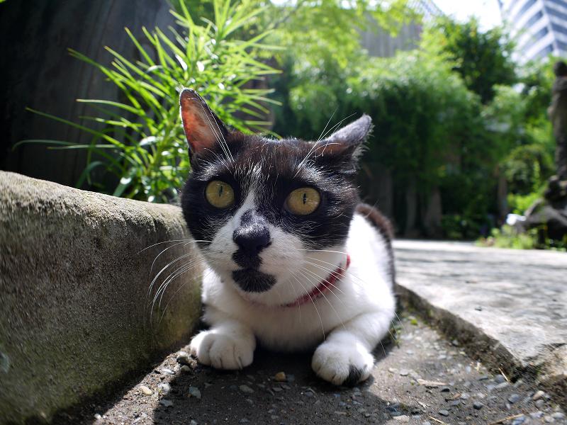 石畳参道の白黒猫3