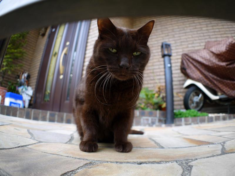 左パンチの黒猫と門扉1