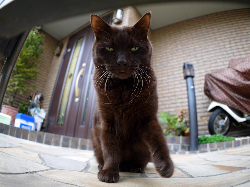 左パンチの黒猫と門扉2