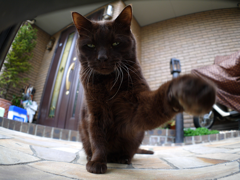 左パンチの黒猫と門扉3