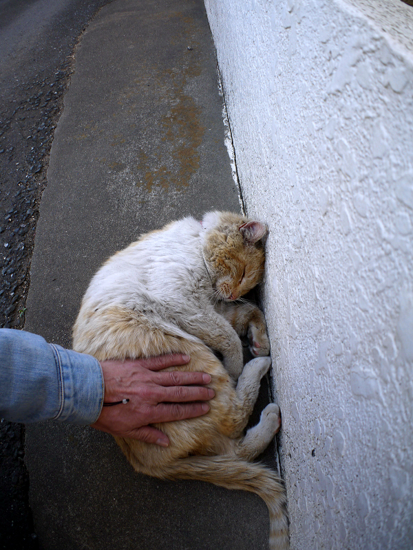 壁横で腰トントンの白茶猫1