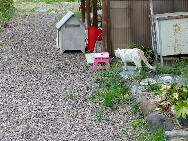 歩き去る茶白猫1