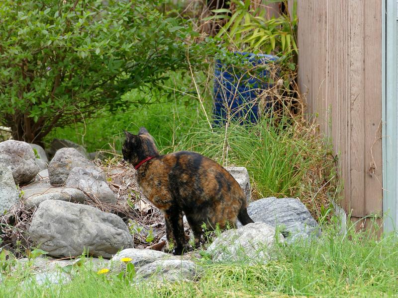 草むらの奥へ動いたサビ柄猫2