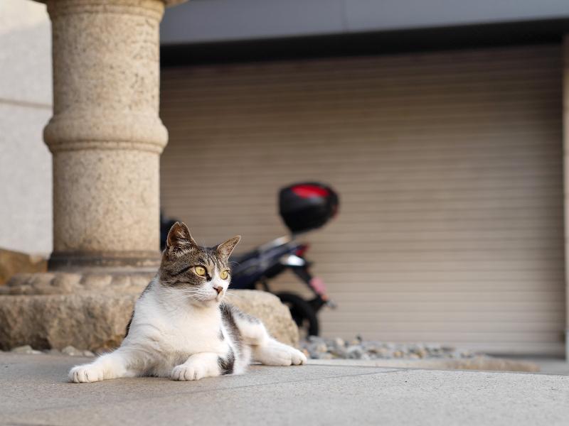支柱とキジ白猫2