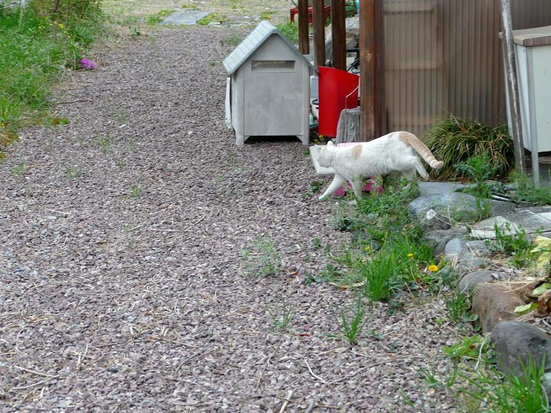 歩き去る茶白猫2