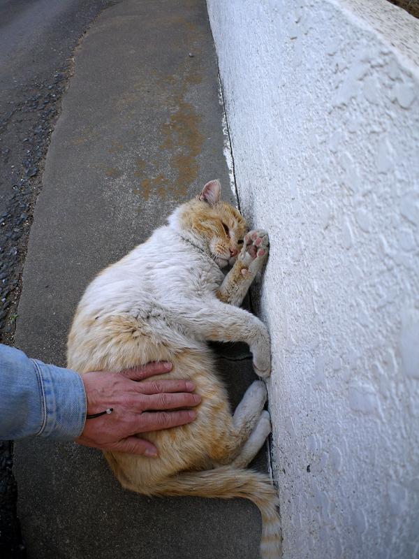 壁横で腰トントンの白茶猫3