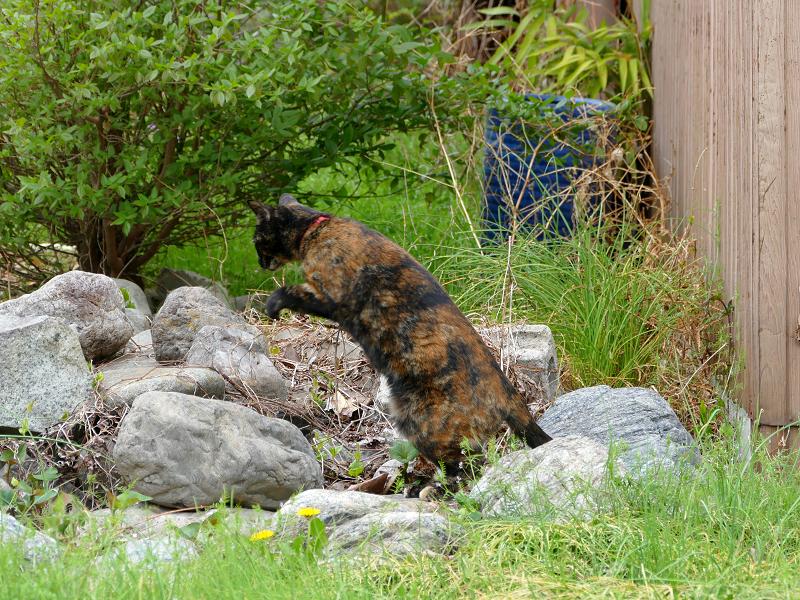 草むらの奥へ動いたサビ柄猫3
