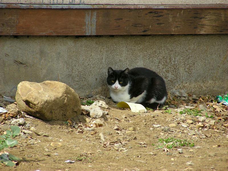 空地の黒白猫2