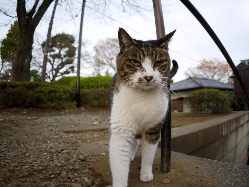 階段手すりに寄りかかったキジ白猫1