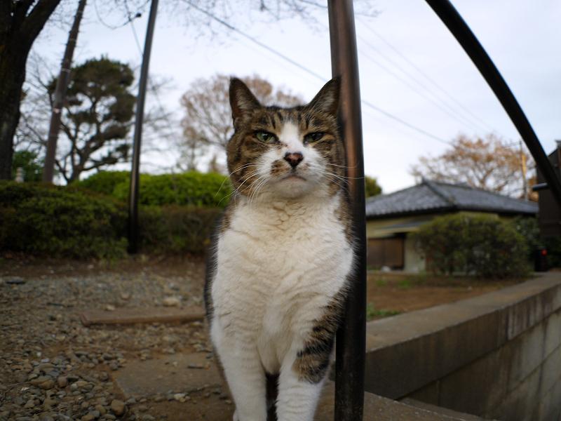階段手すりに寄りかかったキジ白猫2