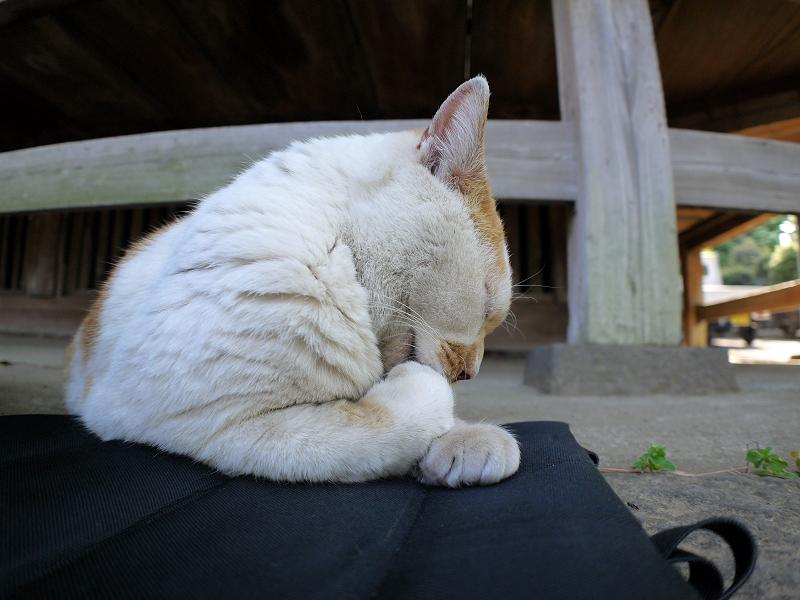クッションシートと茶白猫2