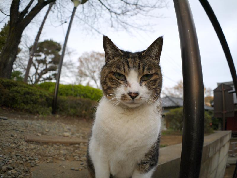 階段手すりに寄りかかったキジ白猫3