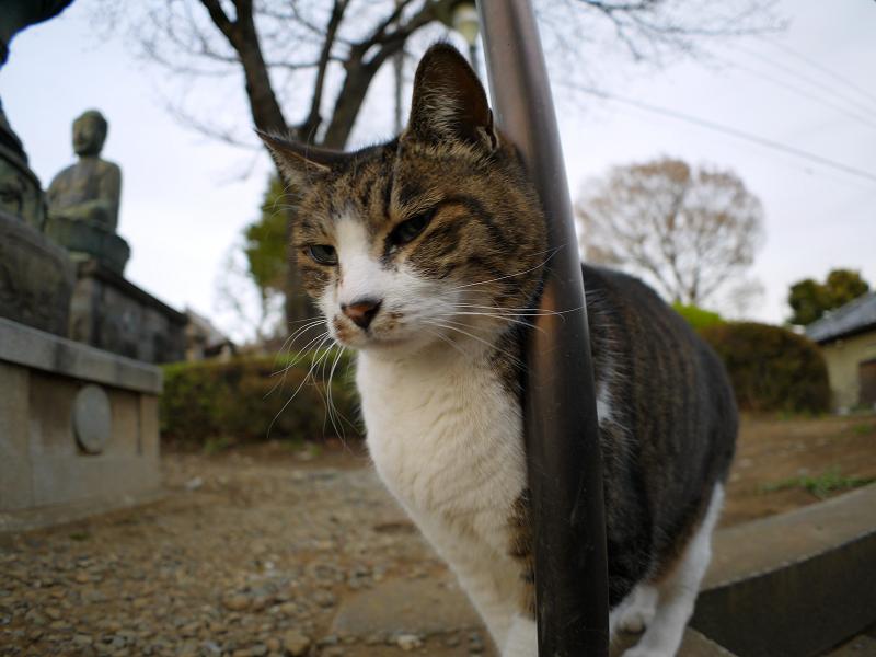 階段手すりに寄りかかったキジ白猫4