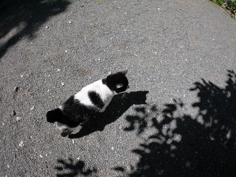 日差しと影と黒白猫1